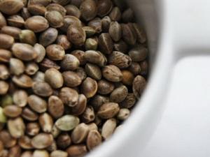 Паста (урбеч) из семечек конопли, 200г