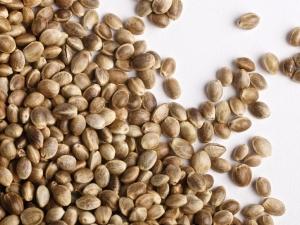 семена подсолнечника неома цена